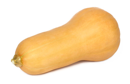 butternut squash: Single butternut squash - isolated