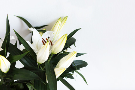 Beautiful white lilies on blurred white background, and green leaves, closeup.