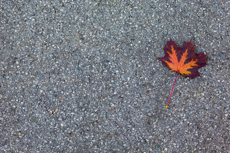 Single lonely autumn orange-brown leaf fallen in the black asphalt. Place for text, copyspace, background