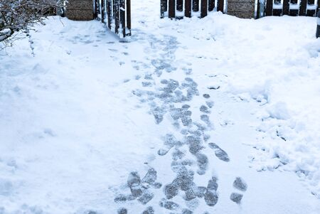 Footprints on a snowy path. Foot prints in the snow-covered path in the yard. 版權商用圖片