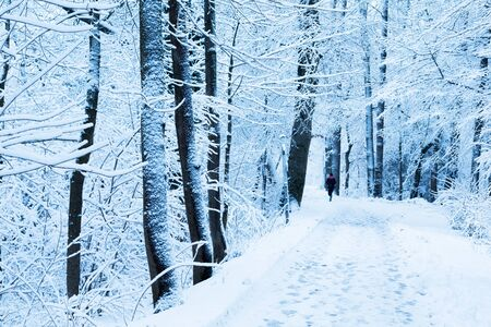 Woman running in the forest in winter time in Munich, Germany.
