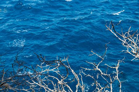 Sharp prickly branches on a background of clear blue sea in a calm, seascape abstract background 写真素材