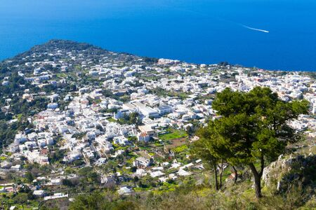 View of Capri with its town, coast and beautiful pine tree.