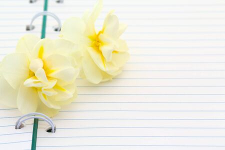 Flowers daffodils with open blank note book