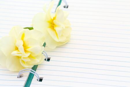 Empty spiral notebook and fresh daffodils , cozy summer breakfast, top view, flat lay, morning free writing. Banco de Imagens