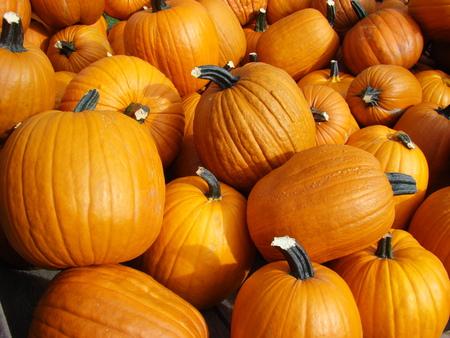 Pumpkins Stock Photo - 1677216