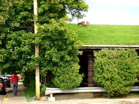 Goat and grass on the roof of a restaurant photo