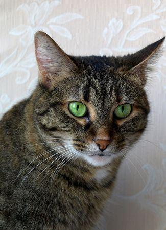 사진 포스터, 녹색 눈을 가진 얼룩덜룩 한 고양이의 프로필