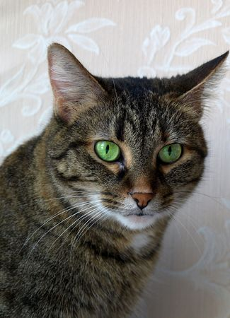 Photo poster, profile of a Tabby cat with green eyes