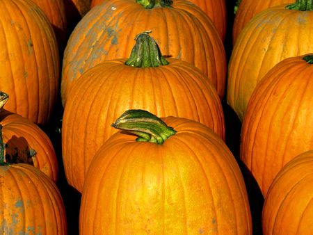 free stock: Free stock image of several pumpkins for sale for holiday decoration for harvest day celebration