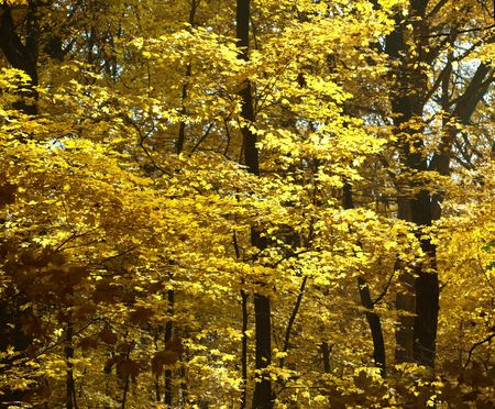 season: Stock photo of fall trees in the forest preserve