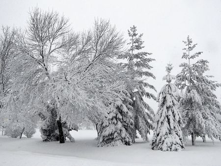 Stock photography of winter wonderland, trees loaded with snow Stock Photo - 3816315
