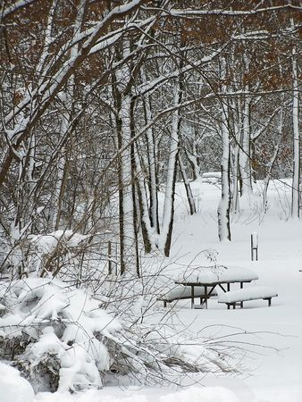 free stock: Free Stock photography of picnic area with several picnic tables in a forest preserve with tall mature trees