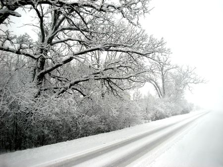 Royalty free photo of trees loaded with snow, photo taken in snow storm