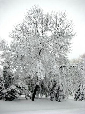 winter wonderland: Royalty free foto di tempesta invernale, gli alberi carichi di neve, Winter Wonderland Archivio Fotografico