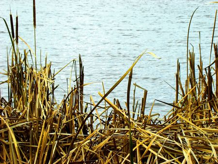 Royalty free photo of fall dried grasses by the lake shore
