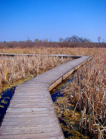 Stock photography of dry vegetation in a state park, wooden trail over the water Stock fotó