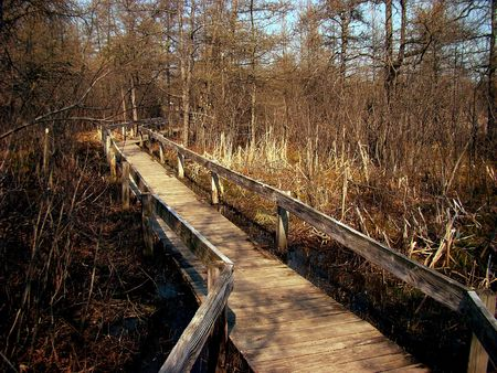 walking path: Stock photography of dry vegetation in a state park, wooden trail over the water Stock Photo