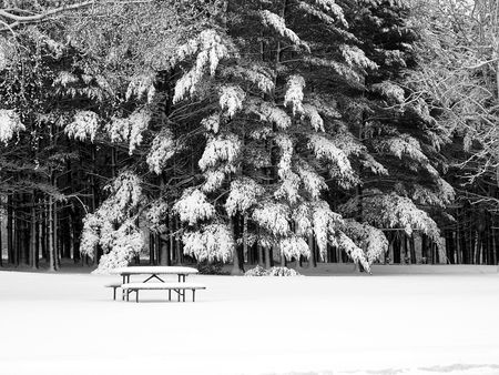 Picture of a lonely bench at the bottom of large and heavy pine trees covered in snow Stock Photo