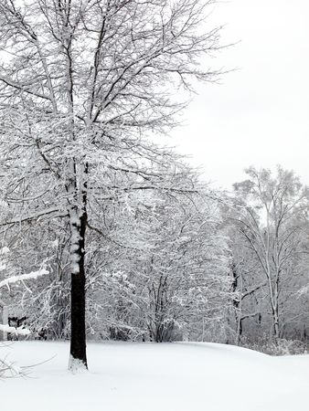 Photo of a single tree covered in snow in a small forest preserve opening - field