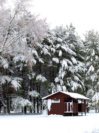 Image of a rural restroom with snowy large pine trees in the background Stock Photo - 5167206