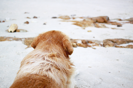 lonliness: Lonely dog on the beach Stock Photo