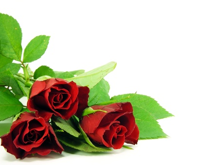 A selection of red roses on a white background with copy space Stock Photo - 10796694