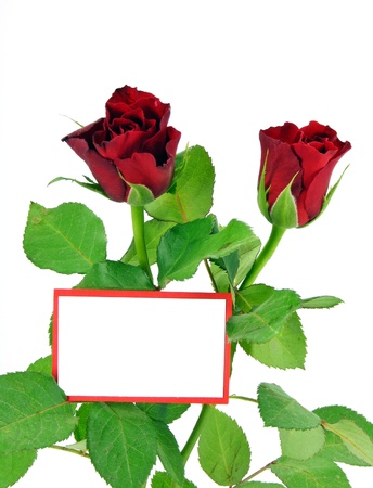 2 red roses & a blank message card with copy space Stock Photo - 11481295