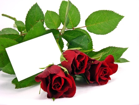 red roses & a blank message card with copy space Stock Photo - 11481300