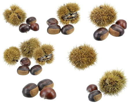 A selection of chestnuts on a white background photo