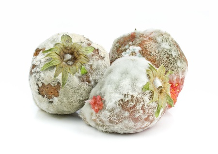 decompose: Rotten mouldy strawberries on a white background