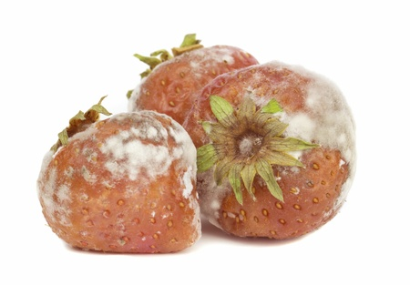 disgusting: Rotten mouldy strawberries on a white background