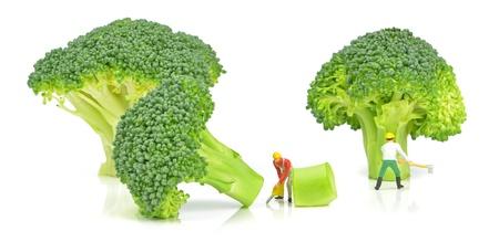 brocoli: Miniature lumberjacks chopping down broccoli trees