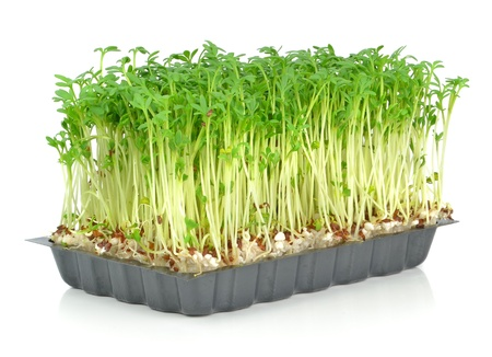 Watercress in a plastic tray on a white background photo