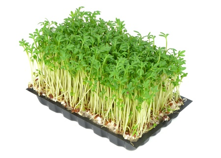 Watercress in a plastic tray on a white background Stock Photo - 17422126