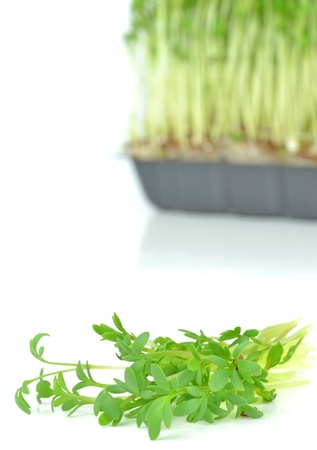 Watercress cuttings on a white background photo