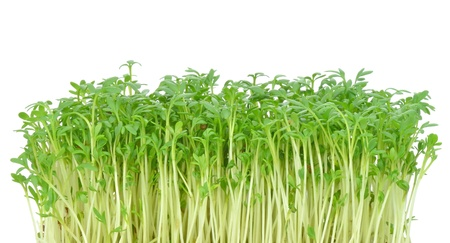 Watercress leaves on a white background with copy space