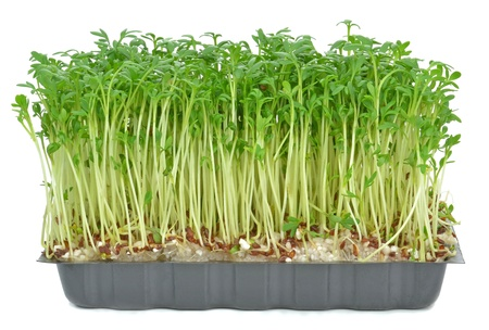Watercress in a plastic tray on a white background Stock Photo - 17422141