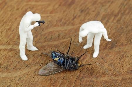 investigators: Miniature investigators photographing a dead fly
