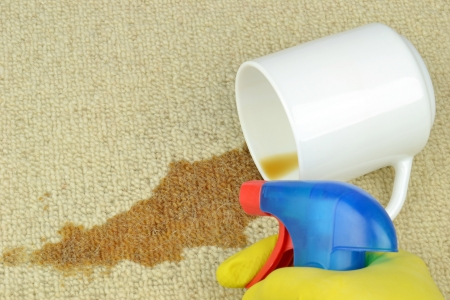 Removing a coffee stain from a carpet with spray bottle of cleaner