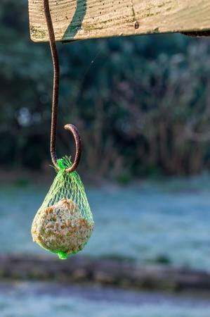 fat bird: A hanging bird seed fat ball net feeder with copy space