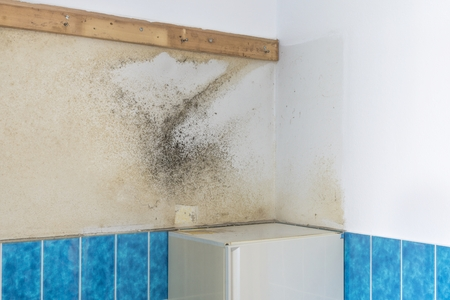 plaster mould: A bathroom wall covered with rising damp and moldy mildew Stock Photo