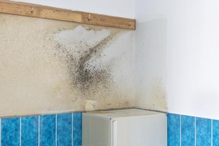 condensacion: Una pared del baño cubierto con el aumento de moho húmedo y mohoso