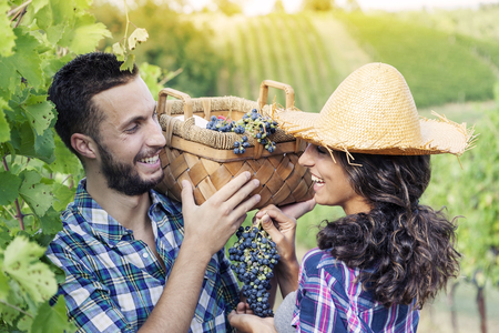 picks: young couple picks grapes in vineyard Stock Photo