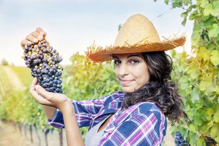 picks: pretty girl picks grapes in a vineyard Stock Photo