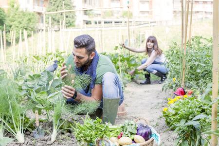 buena salud: joven pareja recoge verduras en el jardín