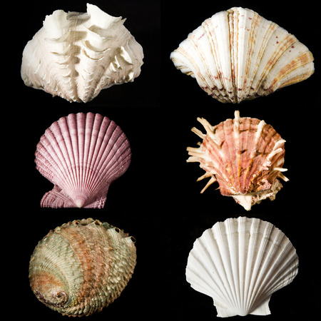 veining: sea shells studio shot collection on black background