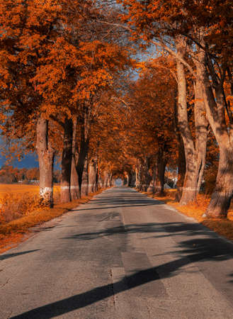 Autumn landscape of a country road. A tunnel made of real trees. Banco de Imagens