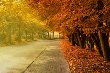 Autumn on street in the cit. The sidewalk under the trees. Stock fotó