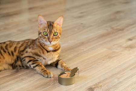 The beloved pet is fed the best cat food. Cat and wet cat food.